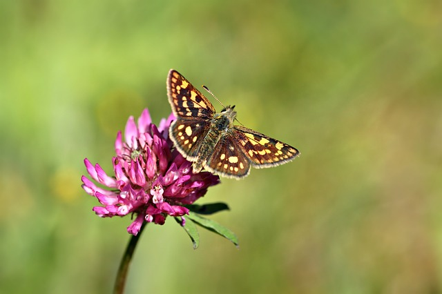 motýl na jeteli
