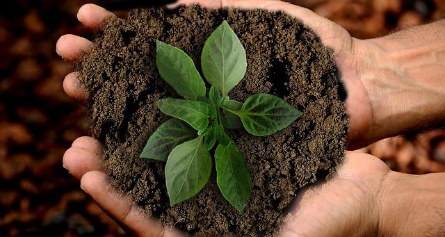 rostlinka v dlaních